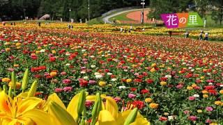 富士見高原花の里は7月18日からナイター営業も始まります。 音楽とナレ...