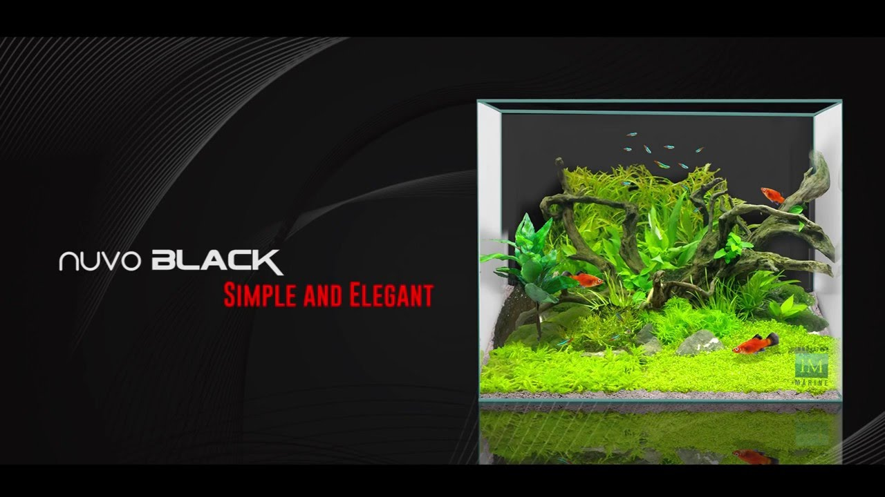 High Quality Aquascaping With Plants In The Innovative Marine NUVO Black   YouTube