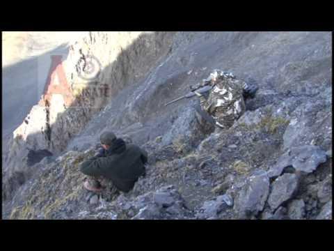 Alaska Dall Sheep and Moose Hunt with some Bush Flying - WCOA Sheep & Moose hunts in 14C