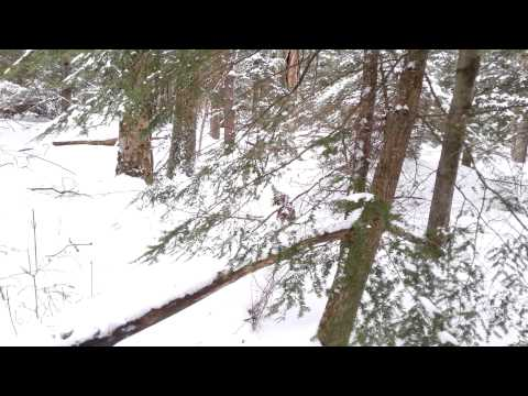 Sasquatch seekers new Hampshire