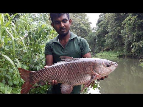 WOW !!! SRI LANKAN RIVERS FISHING 🇱🇰 | FISHING WITH CAST NET | BIG ROHU FISHING | AMAZING FISHING