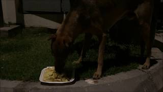 dog at night eating