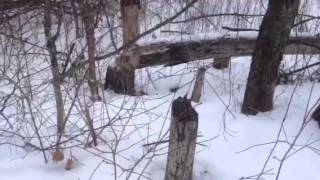 Beaver Activity Along Interloken Trail Finger Lakes Nationa