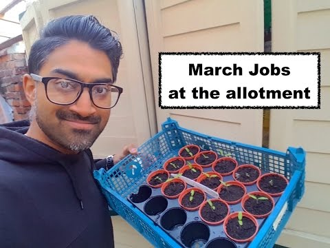 March Jobs at the allotment & quick update - S2 EP5