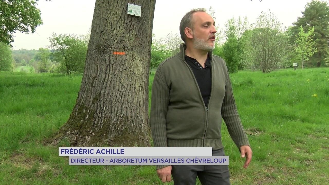 Yvelines | Balade : Nouveaux parcours à l'arboretum de Versailles-Chèvreloup