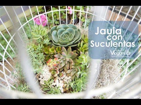 Cómo Sembrar Cactus Y Suculentas  Tvagro Por Juan Gonzalo