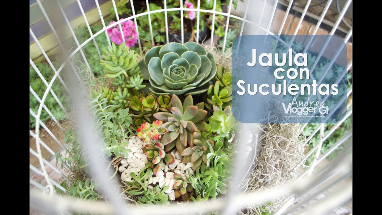 Jaula con Suculentas  Succulents birdcage  YouTube