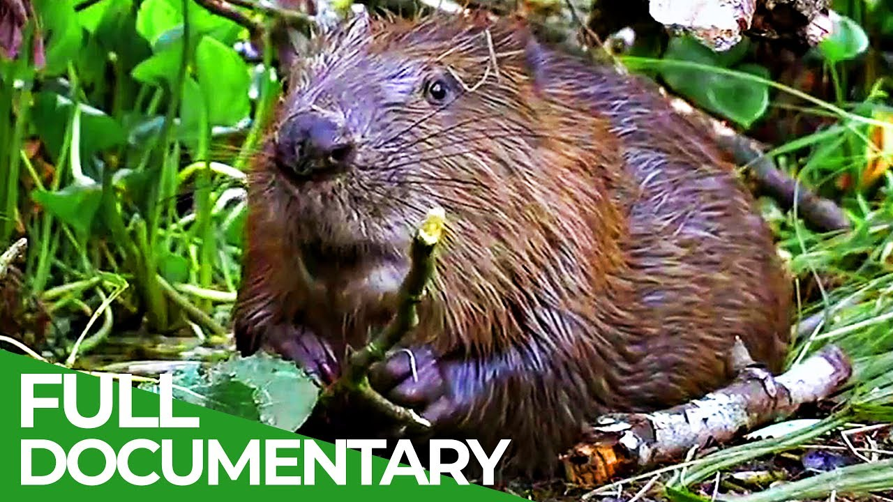 Animals: The first ever Civil Engineers | Free Documentary Nature