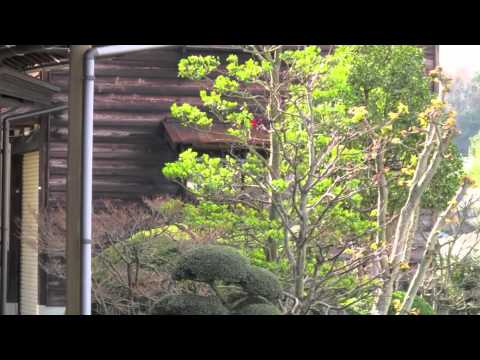 Traditional Residential Japanese Gardens