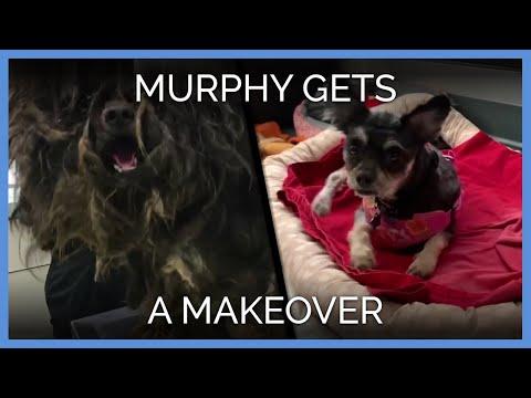 Watch As PETA Recues Murphy From a Life of Filth | PETA