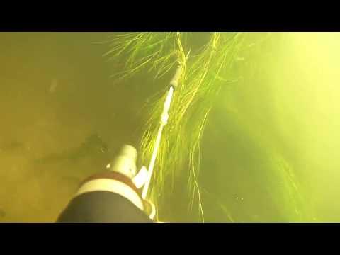 подводная охота днем