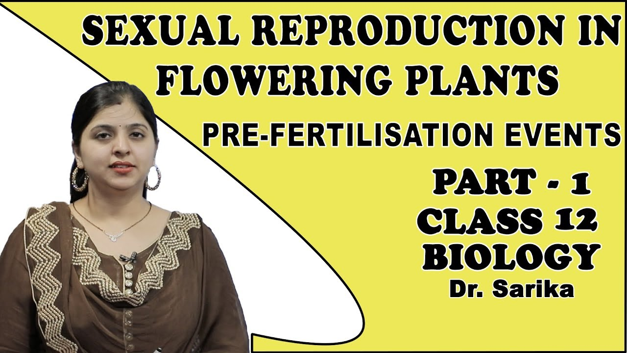 Sexual Reproduction In Flowering Plants Class 12 | Biology | Pre-fertilization Events | iWiz Sarika