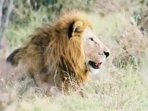 Botswana Trip 2006