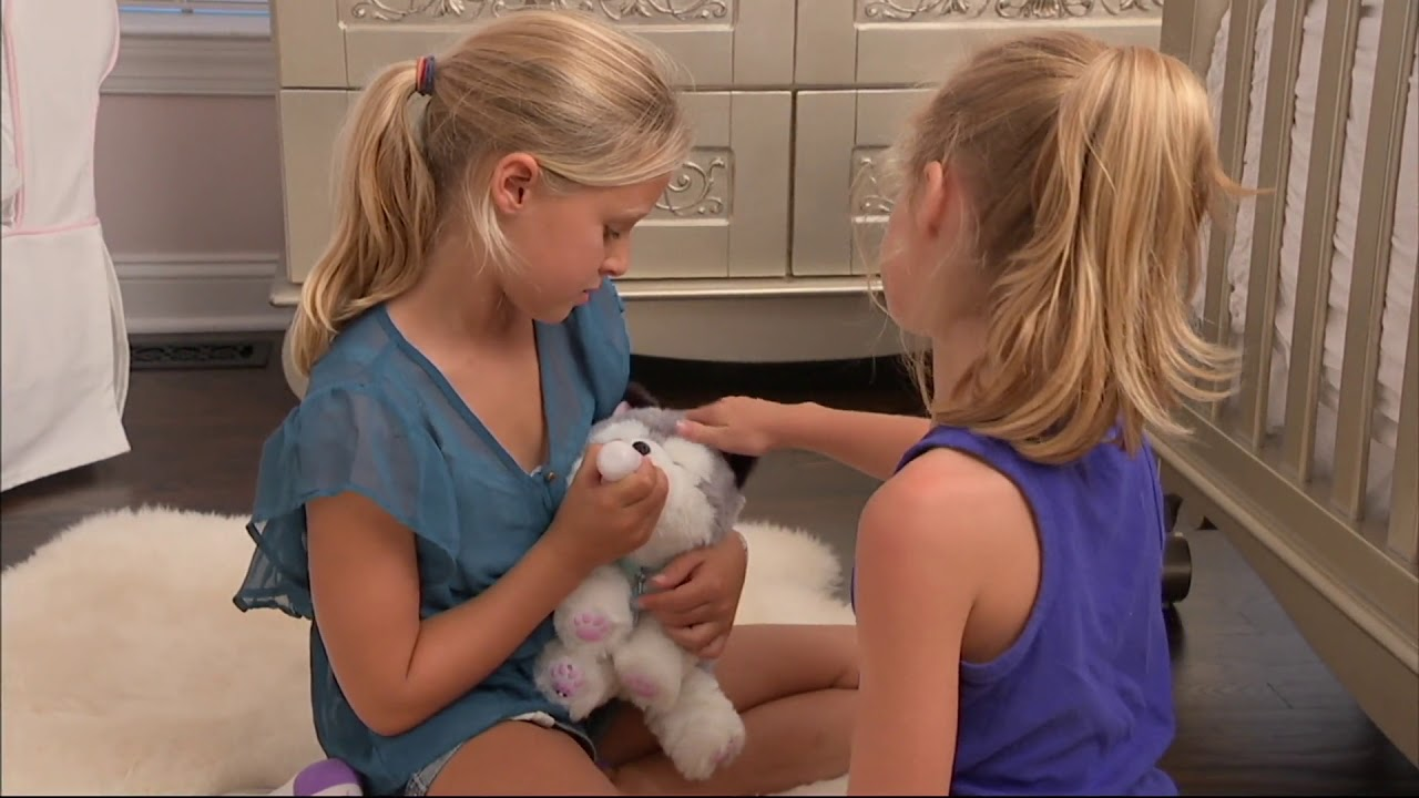 Little Live Pets My Dream Kitten Or Husky Animated Plush On Qvc Youtube