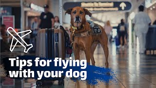 Flying w/ your Dog on an Airplane |VLOG|