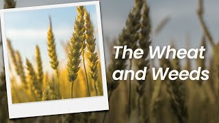 The Wheat and Weeds | February 7th, 2021