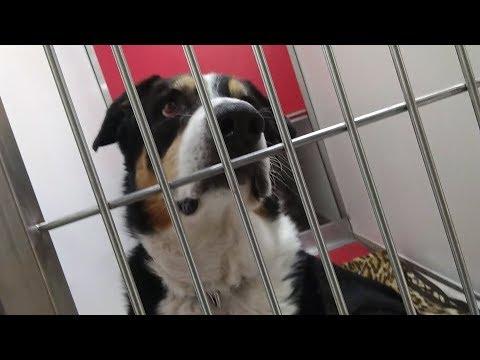 Pima Animal Care Center 8-15-18 Doggie Adoptable- Jasper 10 Year Old Male Kennel D151