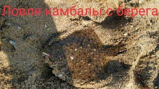 Морская рыбалка Ловля камбалы с берега Catching flounders from the shore