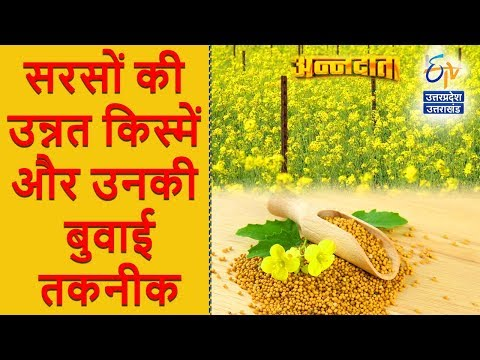 सरसों की उन्नत किस्में और उनकी बुवाई तकनीक | अन्नदाता | 29 September 2017 | ETV UP Uttarakhand