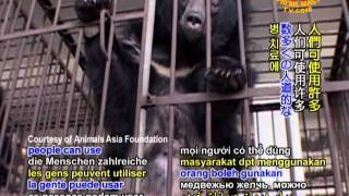 Bear Bile Farms: The Agonizing Truth Behind the Bars