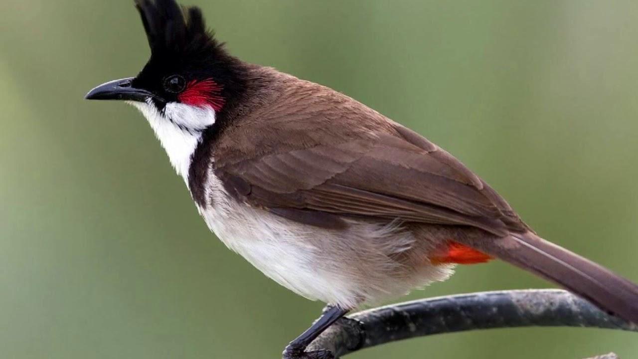 Birds Of Mauritius YouTube