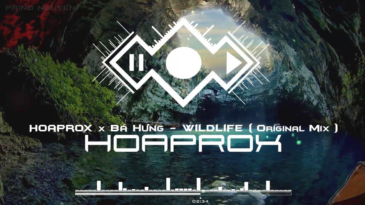 Hoaprox x Bá Hưng - WILDLIFE (Original mix) - (Official Audio) image