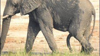 African Wildlife along Chobe River , Botswana