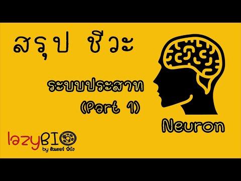 สรุปชีวะ ระบบประสาท EP.1 (เซลล์ประสาท)