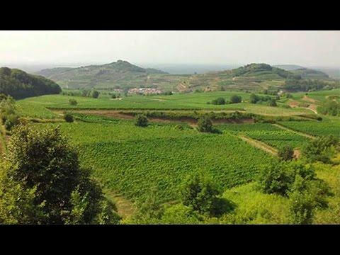[Doku] Traumgärten am Kap - Mit dem Biogärtner in Südafrika (HD)