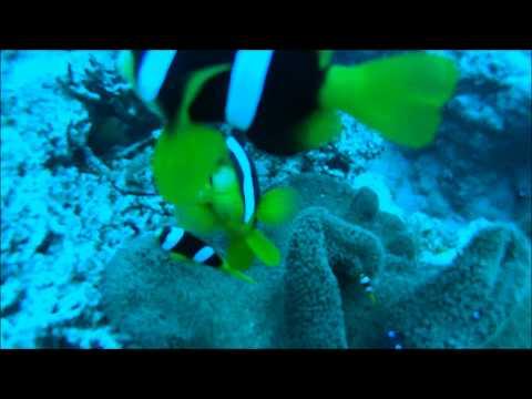 Living Underwater in Vanuatu