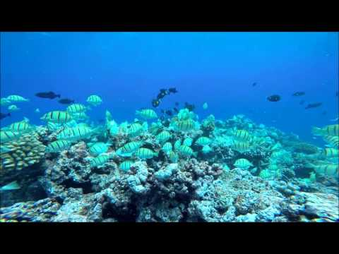 Unda da Sea at Rose Atoll