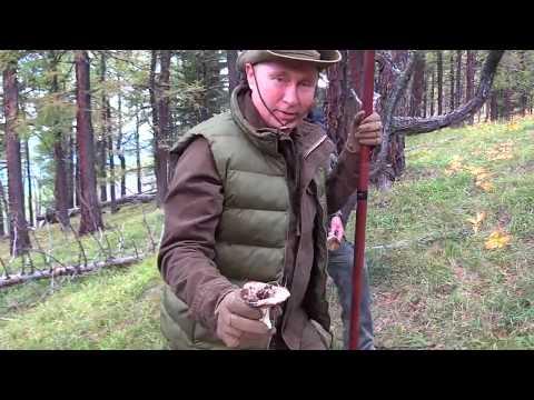 Путин и Шойгу в сибирской тайге