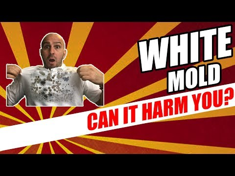 The Truth Is You Are Not The Only Person Concerned About WHITE MOLD