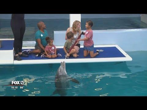 Shark attack survivor meets Winter the Dolphin