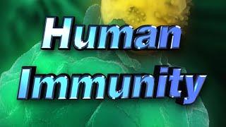 Human Immune System - How It Works - Iken Edu