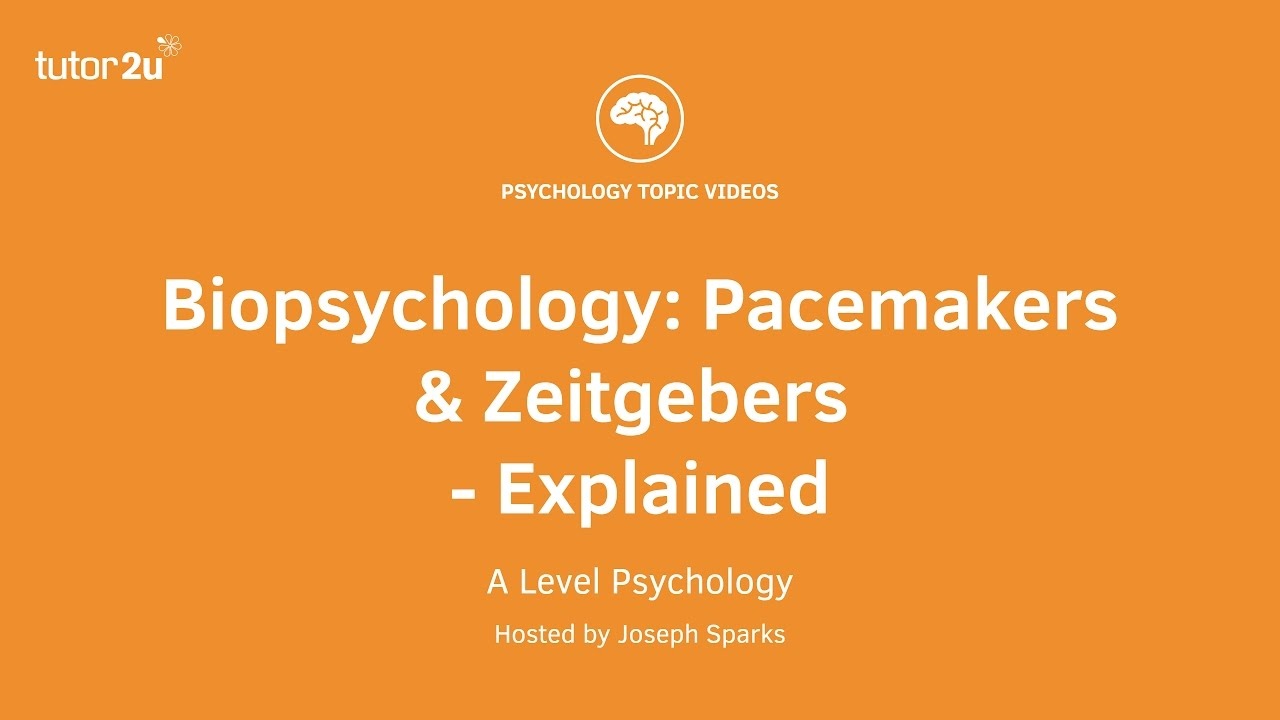 A-level Biological Psychology Revision for Paper 2   Simply