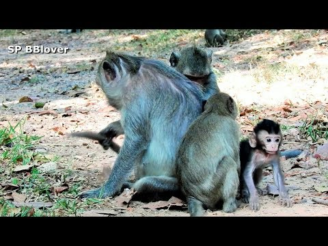 Baby Monkey Play With Tarzanna - SP BBlover - Older Always Come from YouTube · Duration:  10 minutes 13 seconds