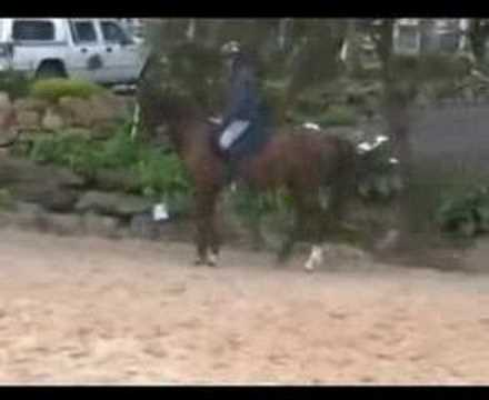 Bridle Lameness Horse Training