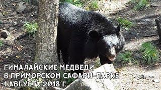 ГИМАЛАЙСКИЕ МЕДВЕДИ В ПРИМОРСКОМ САФАРИ-ПАРКЕ 1 АВГУСТА 2018 Г.