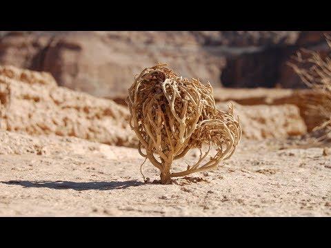 Cette plante morte va ressusciter ! - ZAPPING SAUVAGE