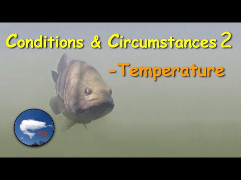 Bass Fishing: Conditions & Circumstances 2: Water Temperature