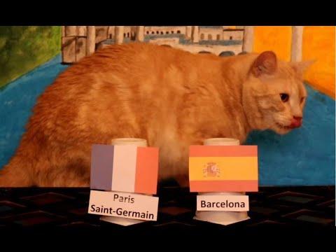FC Barcelona Vs Paris Saint-Germain - Animals Champions League 2020/21 Prediction