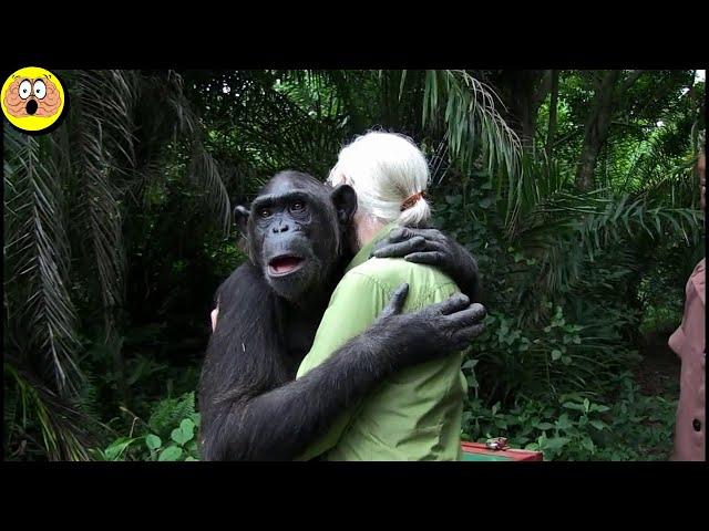 Riunioni e Addii Emozionanti tra Umani e Animali