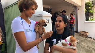Adoption Day at Embark HQ thumbnail