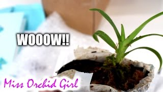 I received an amazing, rare Orchid!!