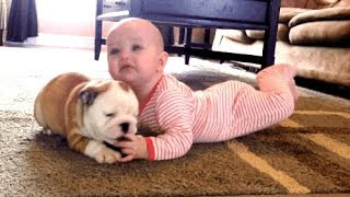 Best Funny Dogs Moments 2019 - Funniest Puppies Moments