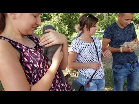 Pets market cute kittens and puppies,  Ukraine