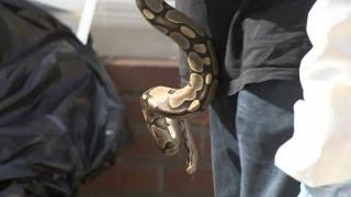"""В США полиция вывезла змей из """"дома ужасов"""""""