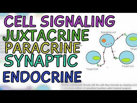 Cell Signaling : Types - Juxtacrine, Paracrine, Synaptic, Endocrine Signalling Pathways