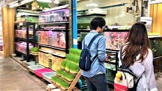 【卸市場 番外編】タイ(バンコク)卸市場 #05「ペット(生体)市場は、熱帯魚からハリネズミまで!チャトゥチャック・ウィークエンド・マーケット」編②(ノーカット&ノー編集版)【海外転売講師の動画講座】
